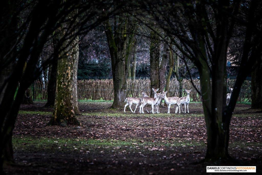 Location Matrimonio Villa Valenca Brescia Servizi Fotografici